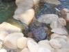 ornimental-pond-and-radius-rock-walls-324