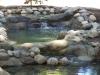 ornimental-pond-and-radius-rock-walls-320